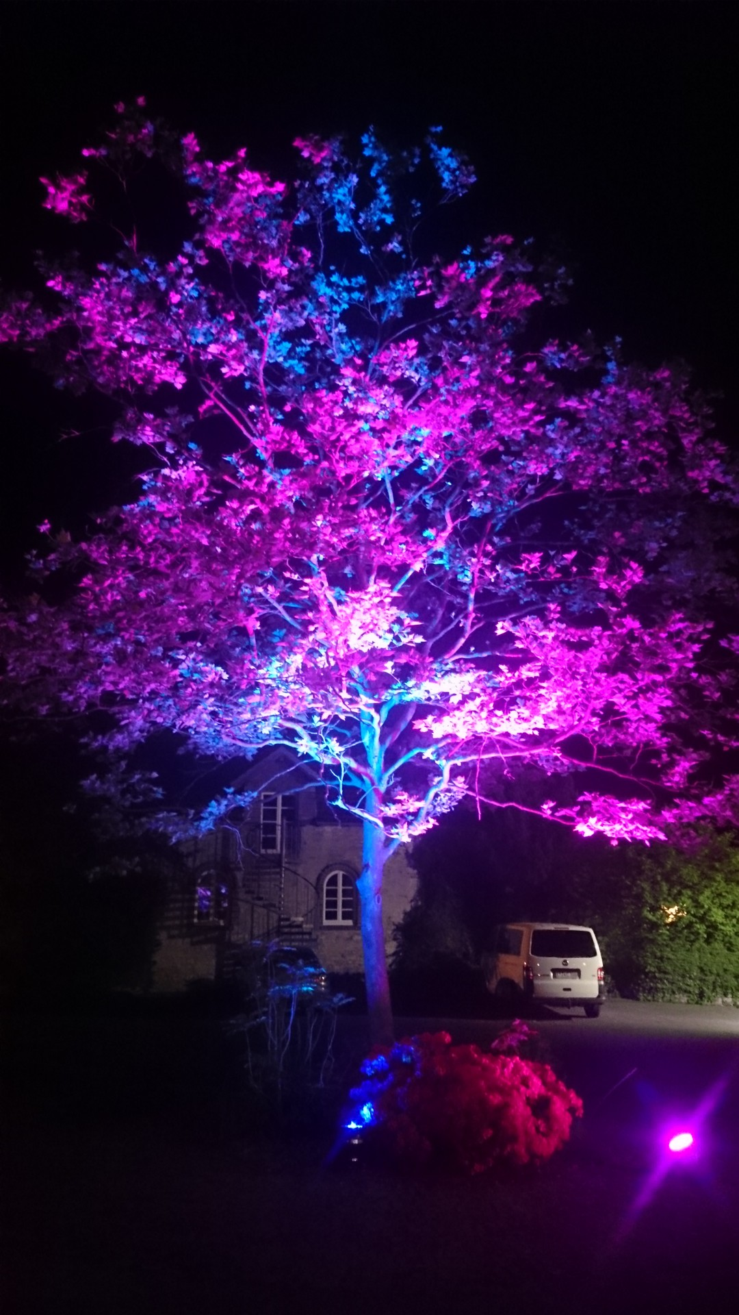 prachtvoll beleuchteter Baum